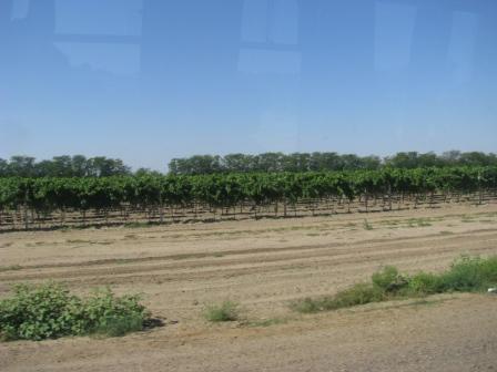 Виноградники в Молдове