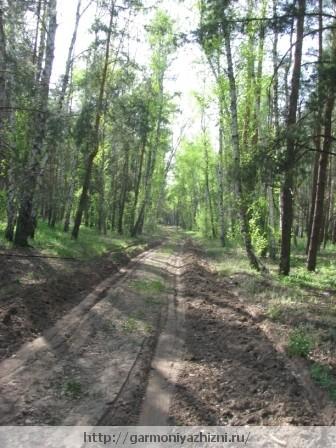 лес и дорога