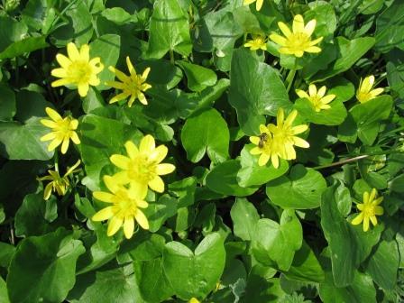 цветы полевые http://garmoniyazhizni.ru