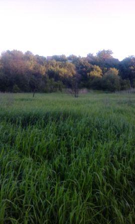 высокая трава клещи