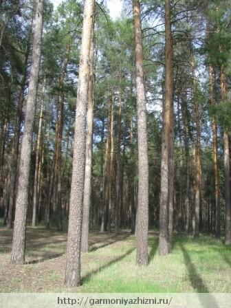 лес всеной