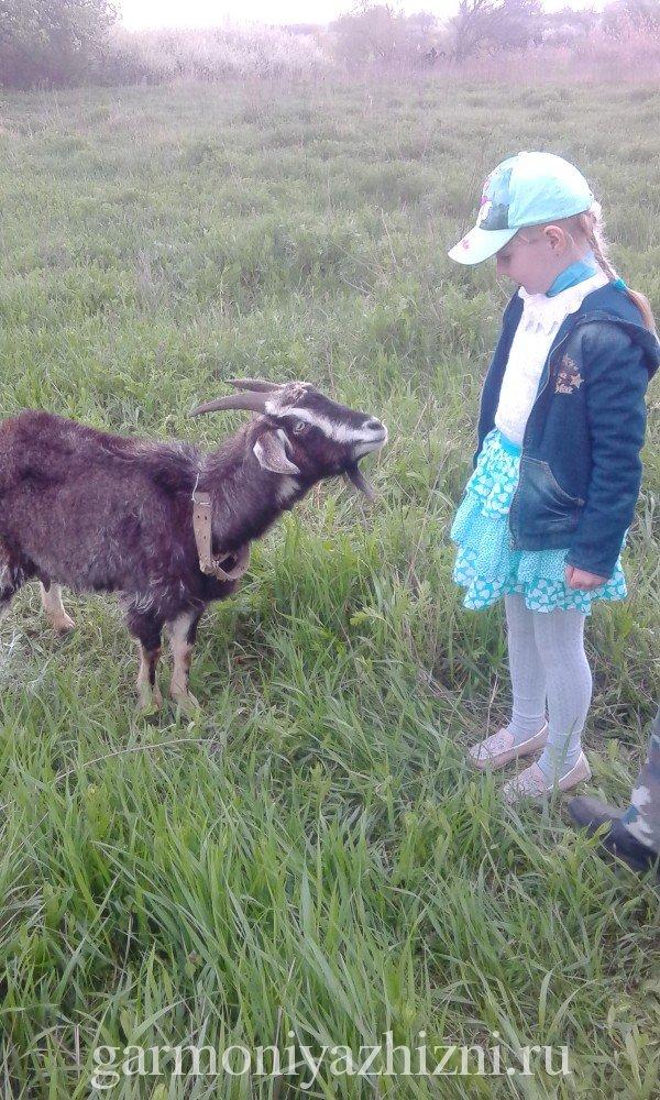Знакомство с козой
