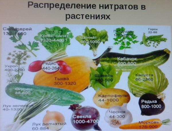 нормы нитратов в овощах