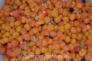 зрелая ягода морошка