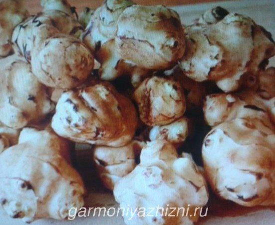 корнеплоды топинамбура